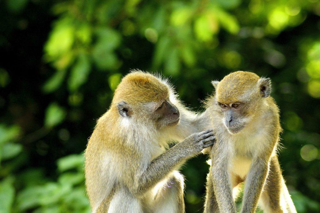 monkey-2500916_1920