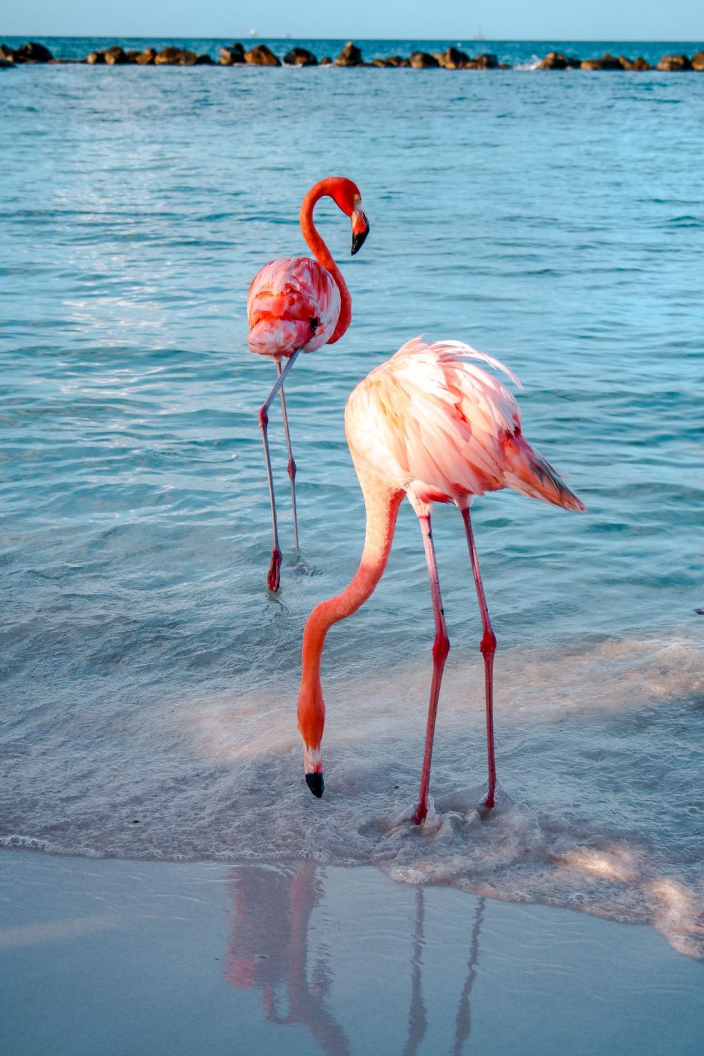 Flamingo Beach: The Ultimate Guide For Visiting