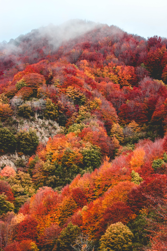 Autumn Hashtags: Maximizing Your Exposure On Instagram