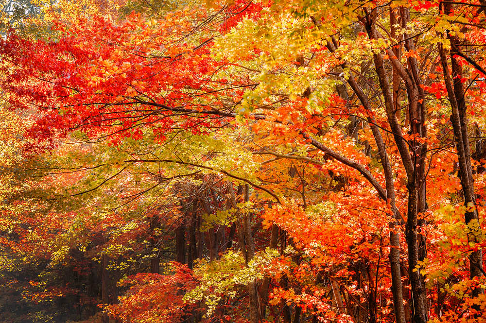 fall foliage in virginia