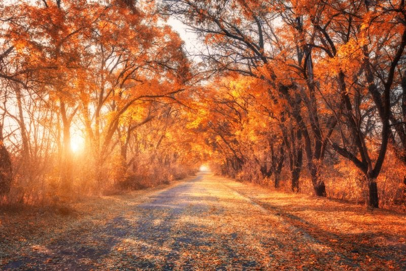 Spectacular Drives In The USA To See Fall Foliage